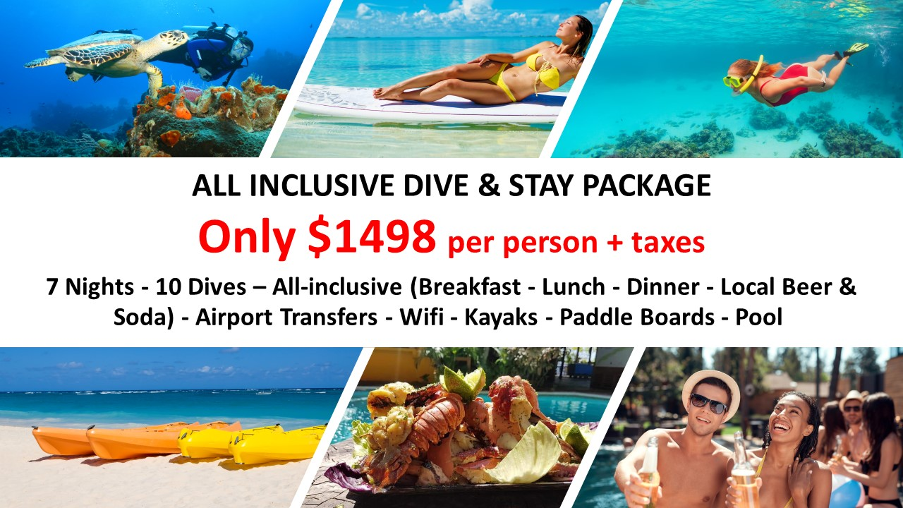 ALL INCLUSIVE DIVE & STAY PACKAGE